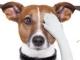 Povinné očkovanie psov a mačiek